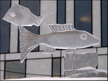 Ice fish in Umeå 2014